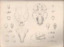 Overview of illustrations in Zoology of the Voyage of HMS Beagle