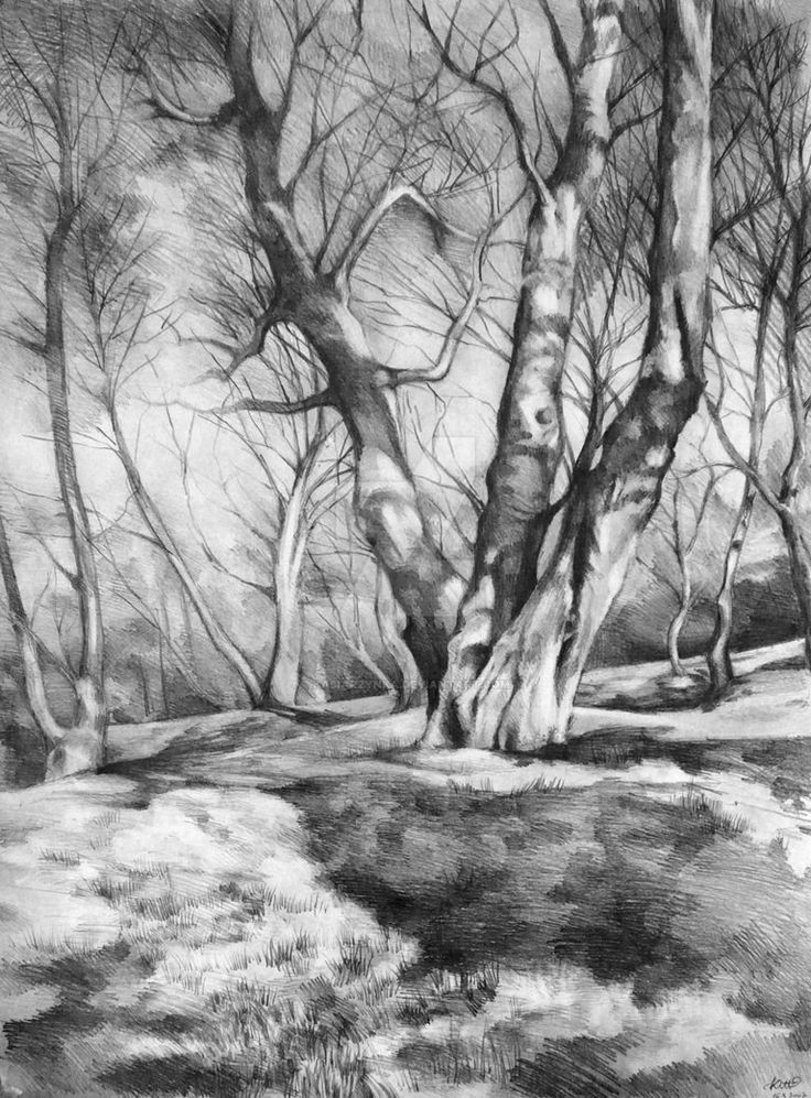 pencil 50x70 cm Signed art prints of 'Musing of Trees' are available on Etsy: www.etsy.com/listing/252682710… Follow me on facebook: www.facebook.com/katarzynakmie…