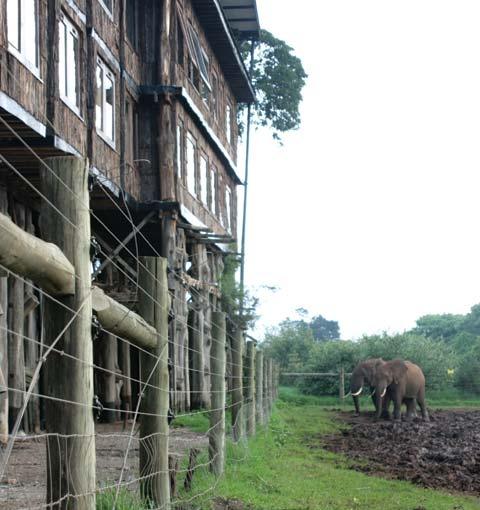 Treetop Hippo Ground