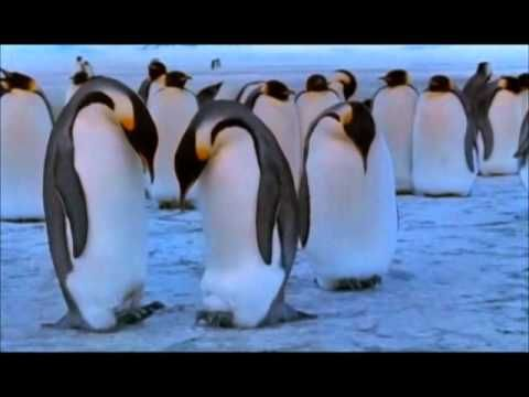 """9 minutes.  A short story about the penguins' circle of life based on the documentary """"March of the penguins""""."""