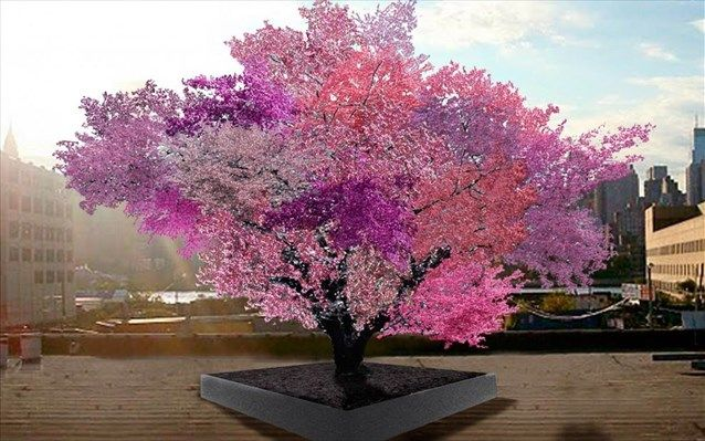 Δέντρο παράγει 40 διαφορετικούς τύπους καρπών | naftemporiki.gr