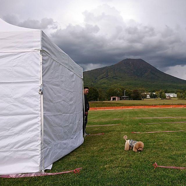 本日、1日早めに 明日のイベント  ドッグフェスIWAKIの 前日搬入終了致しました‼️ 1時位から一時間位 強風と⚡と雨が降り えっ‼️😓 と、思いましたが流石 山の天気。1時間で回復💨  明日はきっと岩木山を 背景に、素敵な1日に😍❤️ 青森の🐶✨全員集合〰️‼️ #ドッグフェスイワキ #岩木山  #しっぽはともだち #犬の手作りおやつ #犬ジャーキー #無添加 #クラフトフェア #まんまのおやつ #愛犬 #愛猫 #仙台無添加ジャーキー #手作り #ドッグフード #国産手作りジャーキー