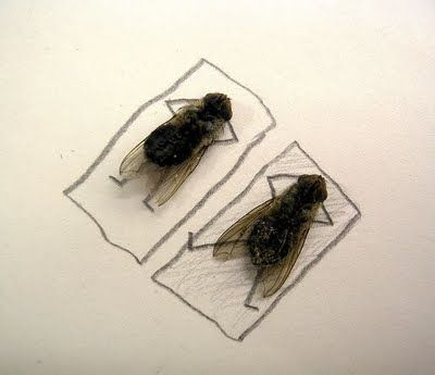 dead flies art 03 464x400 Humorous Fly Art by Magnus Muhr
