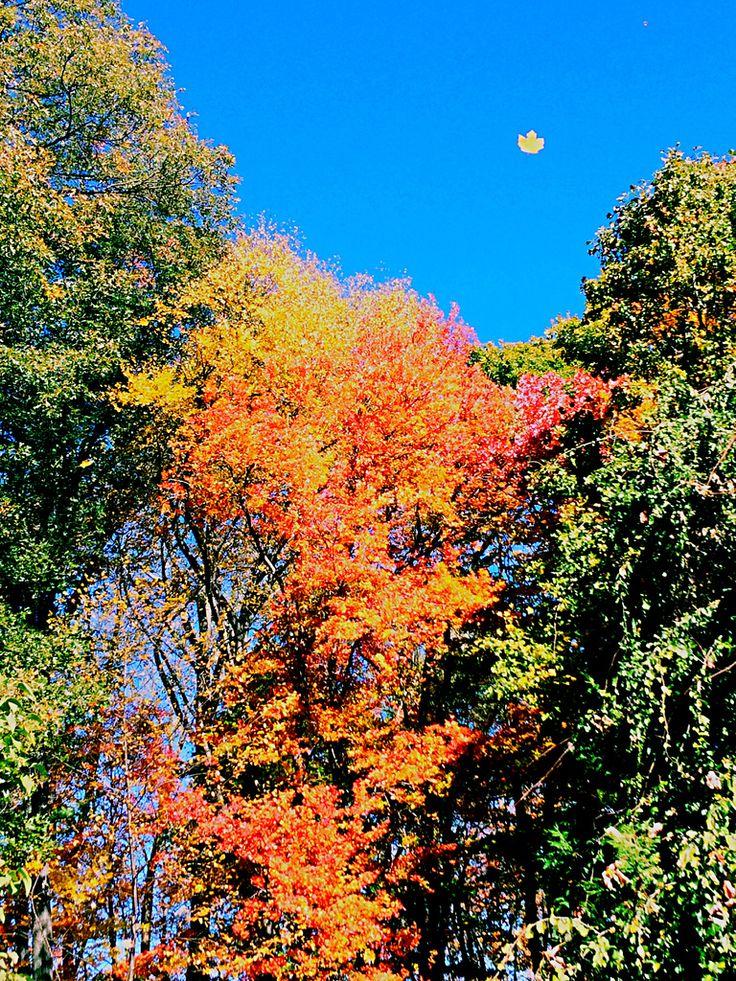 Autumn- Cheshire, Connecticut  10/23/15