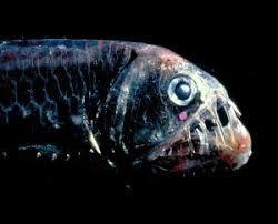 Resultado de imagen de pez abisal real