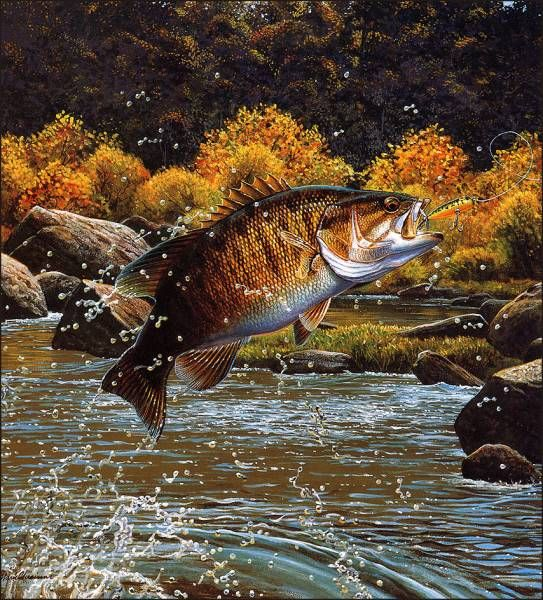 Warriors Of The Rainbow Lodge: 264 Best Images About Art Me Trout/ Walleye/ Fresh Water