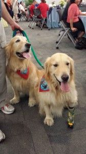 Jason, left, and Journey are two of the volunteer therapy dogs at St. Joseph's Hospital-North. The program, which began last July, now has s...