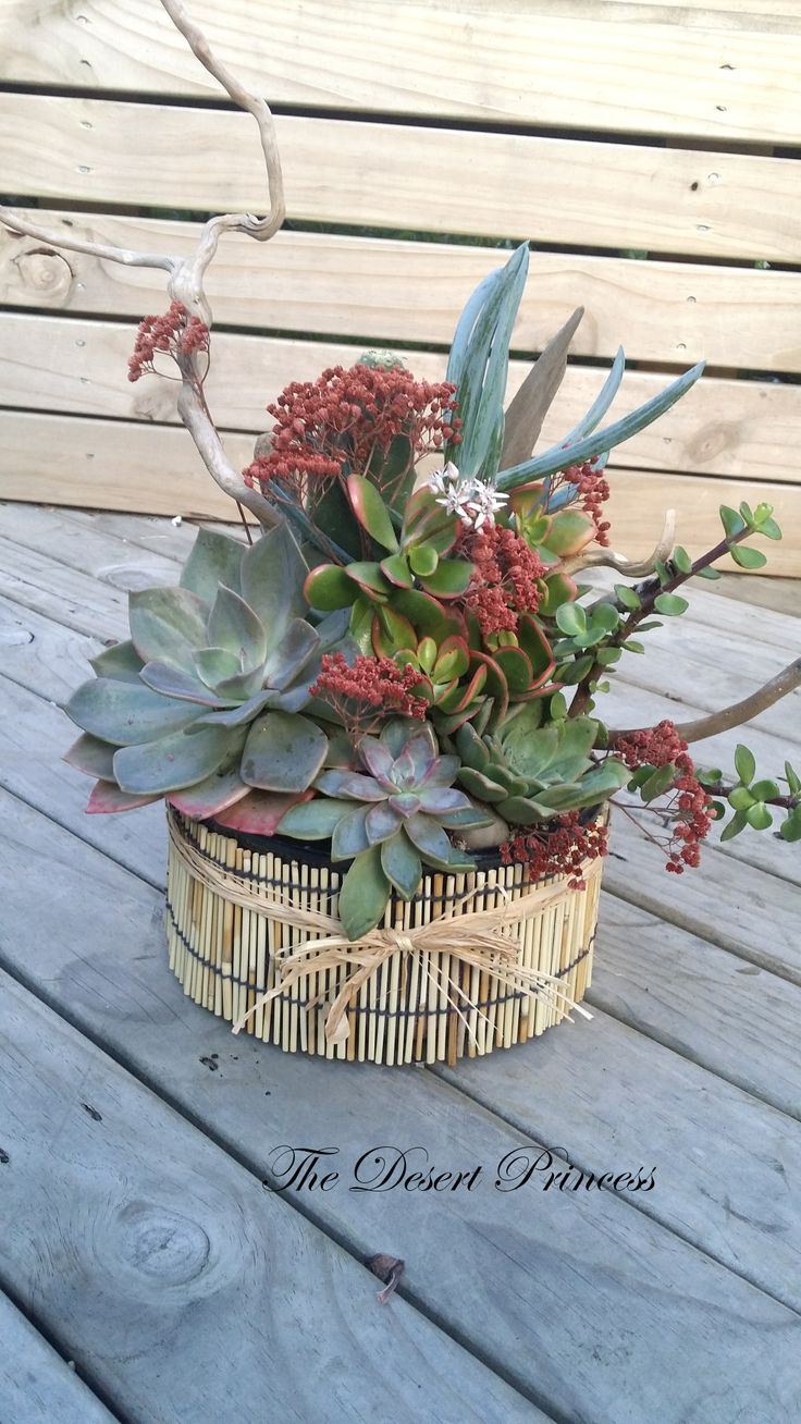 A gorgeous arrangement of echeverias, crassulas, blue chalk plant, bunny  ear cactus,