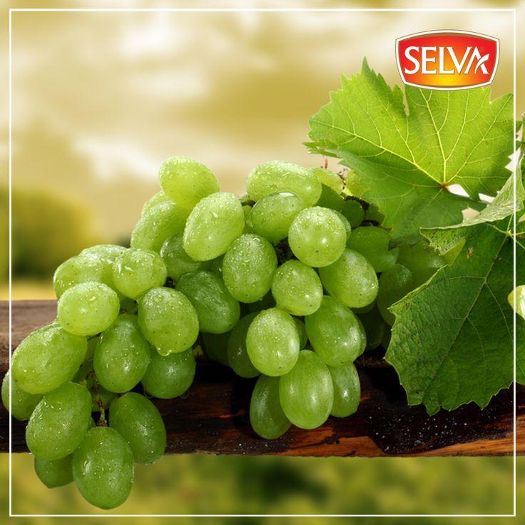 Taze beyaz üzüm, kötü kolesterol seviyesini düşürür ve damar sertliğini önler.