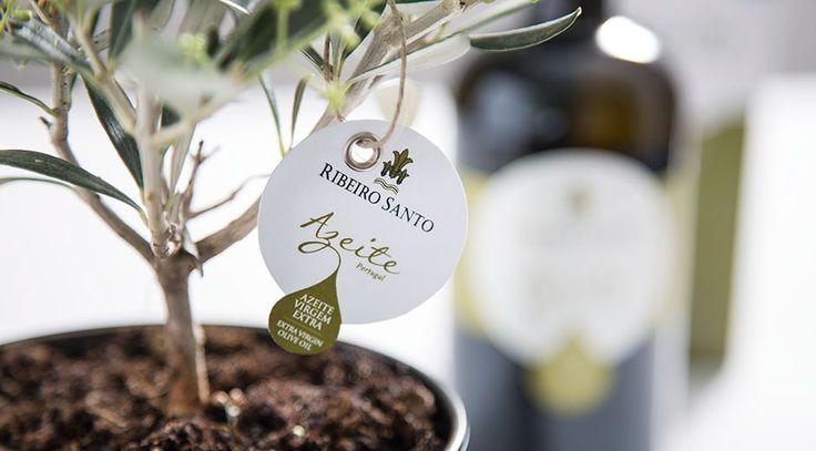 Portugal posee unas 30 variedades de olivo autóctonas, adaptadas a su clima. Las variedades más representativas en Portugal son 'Cobrançosa', 'Cordovil', 'Galega' y 'Verdeal'.