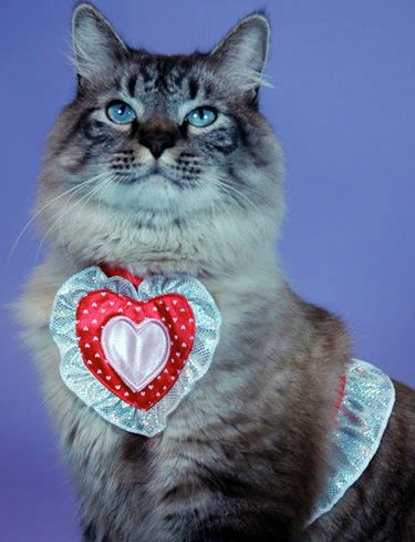 Cat lover dating video introduction effects