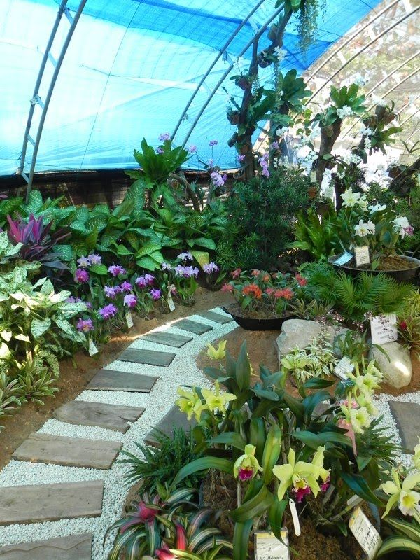 17 best images about landscape on pinterest gardens for Landscaping plants in the philippines