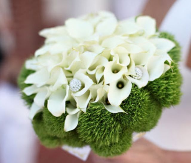 best dianthus green trick wedding flowers images on, Natural flower