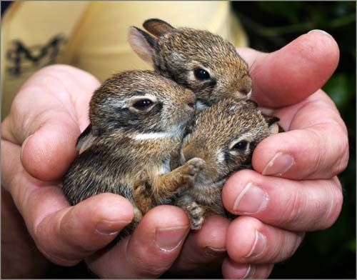My brother and I each got a bunny like these for Easter one year.  We were about 5 and 6 years old.  So cute!!!