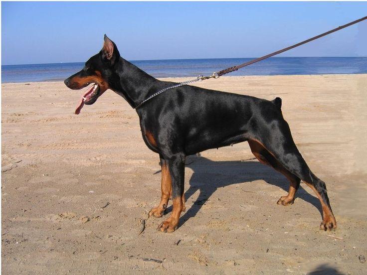 Top 10 de Perros de Guardia - Taringa!