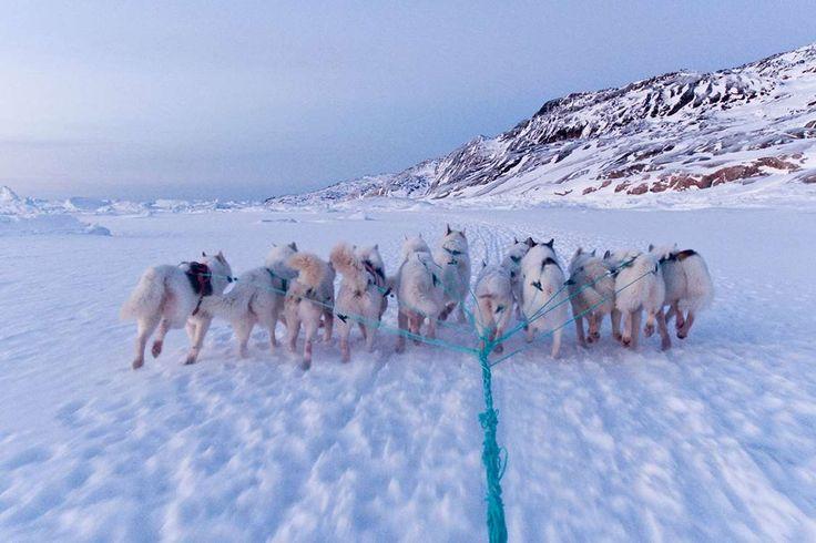Winter adventure in Kangerlussuaq and Sisimiut - Greenland.com