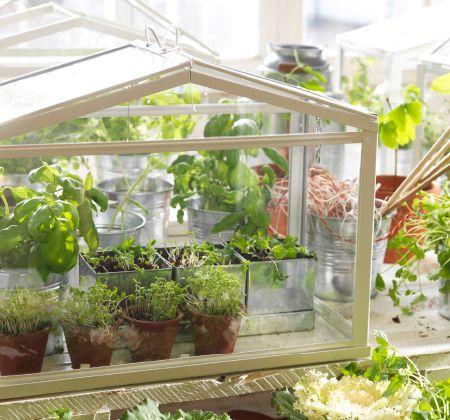 Uno de nuestros pedestales para plantas un invernadero en - Plantas ikea naturales ...