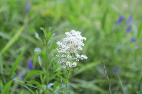 Herbs for Postherpetic Neuralgia