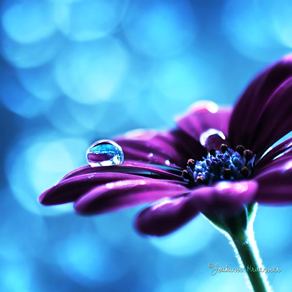 Flowers and water droplets... these have to be my favourite pics!!!