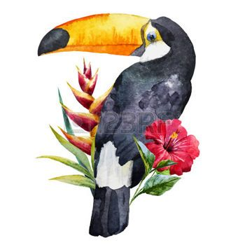 loro: Hermosa imagen con buen tucán acuarela con flores