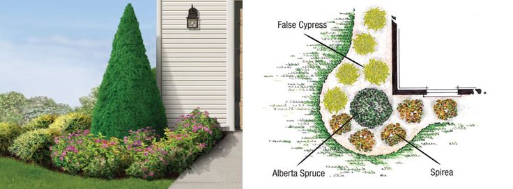 House corner tree evergreen google search plants and for Corner house garden designs