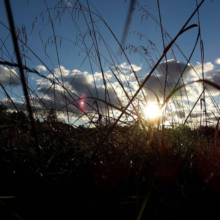«#sun #clouds #autumn #grass #october #nature #солнце #облака #небо #трава #осень #октябрь #sky #природа»