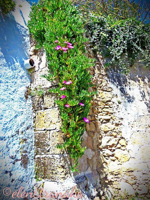 Ελένη Τράνακα: Πικριδιώτισσα, Ζάκυνθος - Pikridiotissa, Zakynthos