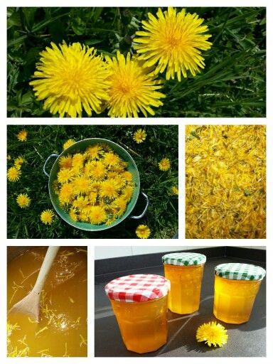 PAARDENBLOEMJAM Ingrediënten: - 200 paardenbloemen - 2 sinaasappels (sap en eventueel schilrasp) - 1 citroen - meer dan een halve liter water - geleisuiker (Verhouding: 325 – 350 g geleisuiker op 300 ml sap) Bereiding: Pluk de bloemen als ze droog zijn en open staan. Haal daarna de bloemblaadjes en stampers van de bloemen en doe die in een pan. Probeer zo min mogelijk groen erbij te krijgen, want dat is een beetje bitter van smaak. Maar een beetje groen is niet erg. Laat een aantal…
