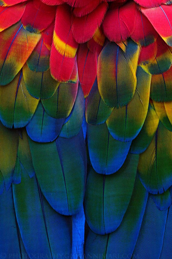 Plumes and Colors by Giovanni Mari on 500px.  Macaw feathers.