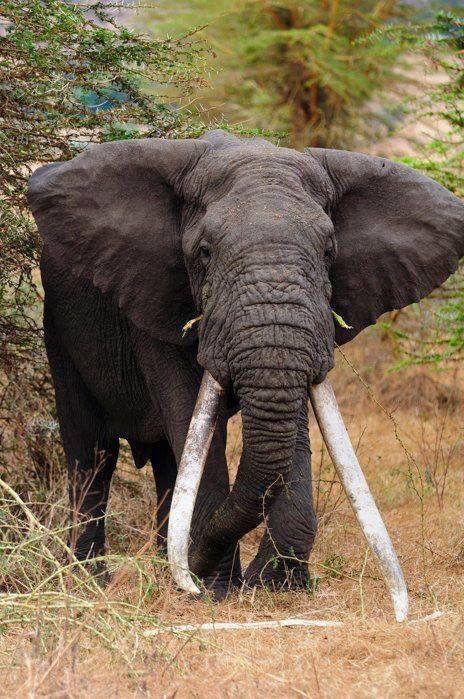 Massive elephant!!