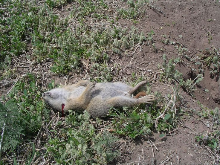 SYRIAN ARMY FREES ALL AL-SHUQAYF AND FACTORIES; ARMY PUMMELS JAYSH AL-ISLAM IN DOUMAA; Ziad Fadel / 4 hours ago image: DER'AH:  What a pleasure to report the death of a notorious, terrorist rodent … https://winstonclose.me/2016/10/04/terrorist-commander-ambushed-in-derah-and-killed-like-a-rabid-dog-white-helmets-fiasco-by-ziad-fadel/
