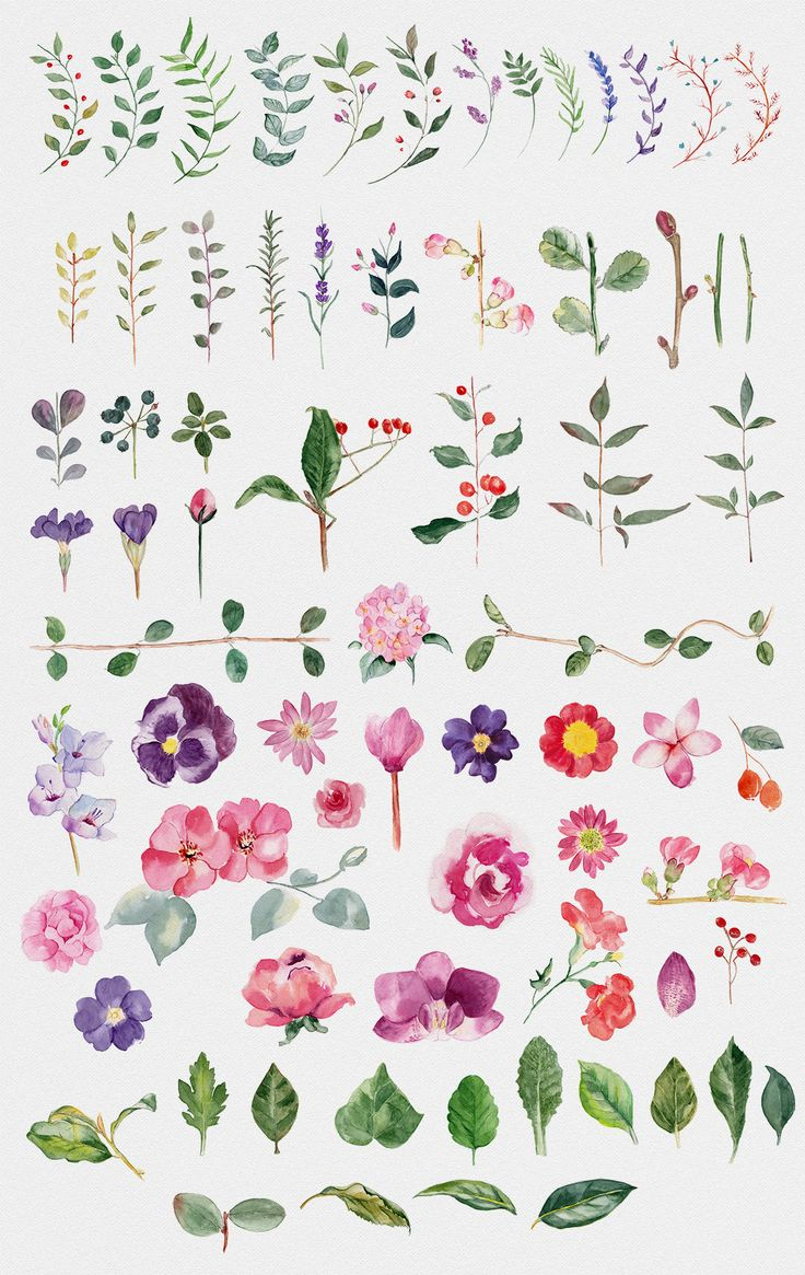 Hello. Here is a great file for who loving flowers and spring like me. With this file you will get 71 handmade watercolor flower illustrations and a custom wreath generator for Photoshop.
