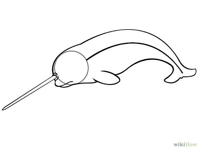 draw a narwhal step 3jpg