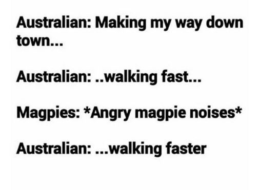 More like *running down the street screaming your head off while rapidly waving your arms around your head because magpies are little fuckers that have no mercy