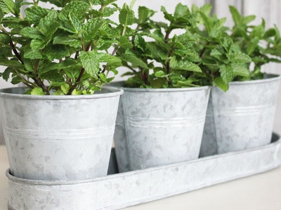 124 best images about garden on pinterest gardens Kitchen windowsill herb pots