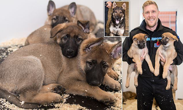 Manchester Police Dog Unit Welcomes Nine New Members Manchester
