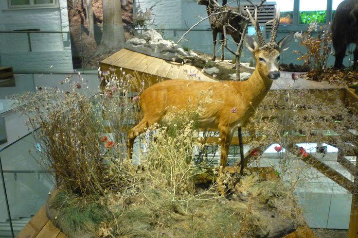 Clay Flowers in the Museum of Natural History - Grassalkovich Castle, Hatvan ..........Agyagvirágok a Természettudományi Múzeumban - Grassalkovich Kastély, Hatvan