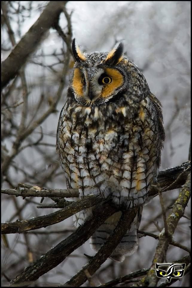Best 25 Owl Pictures Ideas On Pinterest Pics Of Owls