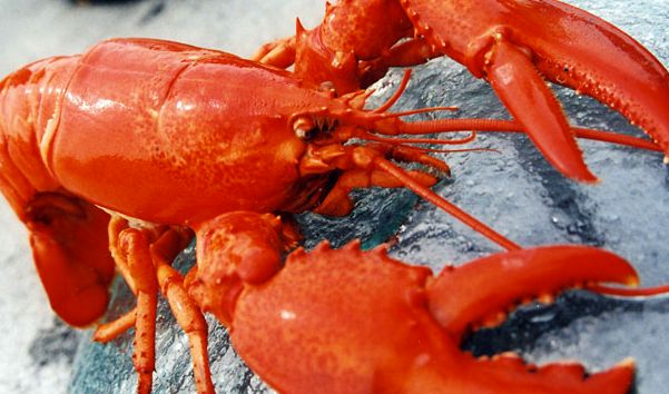 Shells In Maine | lobster delivery service, Get Maine Lobster, announces soft shell ...