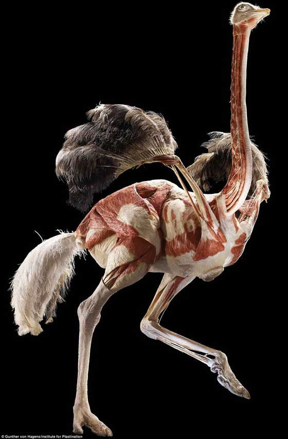 La exposición Animal Inside Out, maravillosa anatomía y arte con animales - Animal Inside Out exhibition exposes anatomy and art of 'wonderful beings'