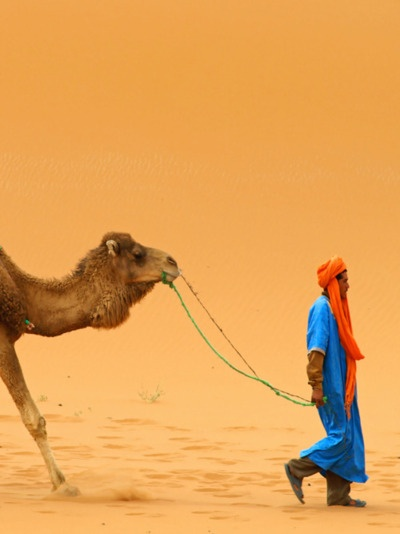 camel: Small Moments, Buckets Lists, Blue, Color, Camels, Morocco, Adventure Travel, Photo, Long Walks