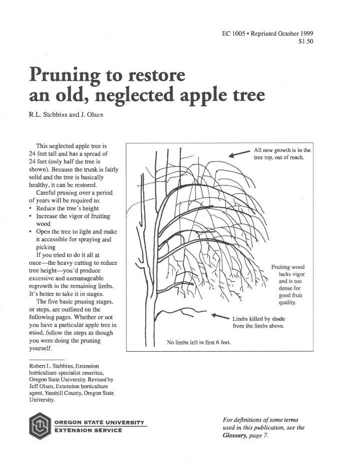 Pruning to restore an old, neglected apple tree | Oregon State University Extension
