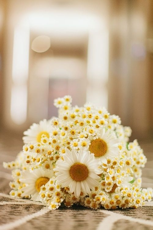 bouquet de mariage / bouquet de mariée #weddingbouquet #bridalbouquet: Summer Wedding Ideas, Flowers Bouquets, Flowers Girls, Wedding Flowers, Bridesmaid, Daisies Bouquets, Push Daisies, Bouquets Wedding, Daisies Wedding Bouquets