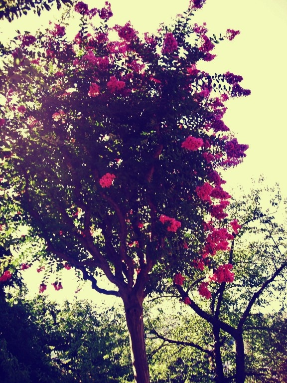 Summer Fragance