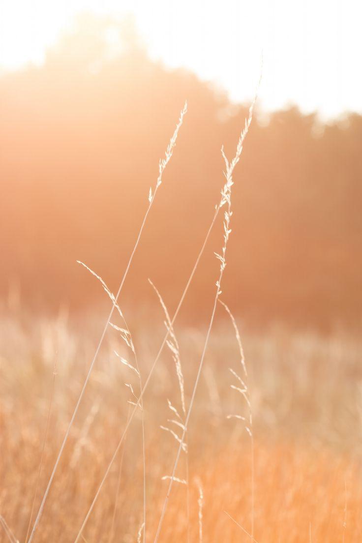 Meadow by Martin Kubečka on 500px