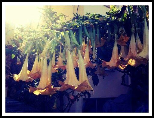 Flowers of spring! Crete!
