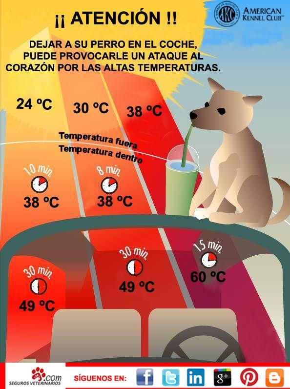 En época de vacaciones y con las altas temperaturas debemos de tener cuidado con dejar a nuestra #mascota en el coche. Los efectos negativas pueden ser muy graves.  Para estar tranquilo, que mejor que tener asegurado a nuestro #perro con SegurosVeterinarios.com.