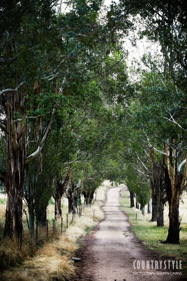 Country Style magazine. Photography Sharyn Cairns, Meadow Flat, NSW. #ontheroad #countrystyle #countrydrive
