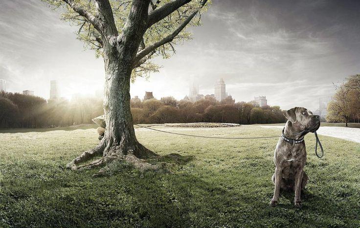 Client : Kellogg' s // Agency : Leo Burnett Torino // copyrighted GIACOMO BIAGI #dog #animal #canecorso