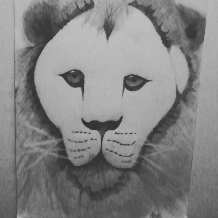 Lion #my drawing